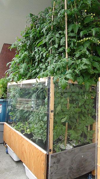 Mobile tomato bin